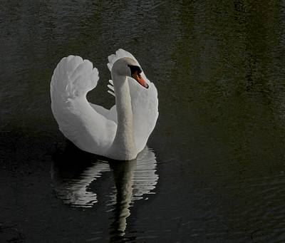 Ride A White Swan Poster by Odd Jeppesen