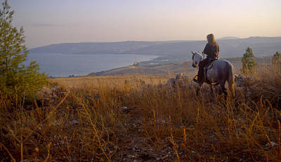 Riding Horse By Lake Galilee At Sunset Poster