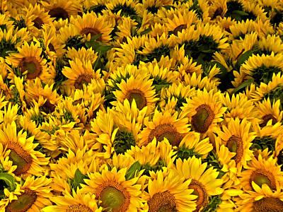 Poster featuring the photograph Riotous Sunflowers by Nancy De Flon