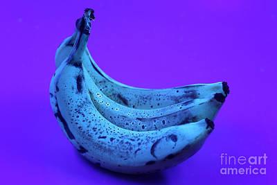 Ripe Bananas In Uv Light 22 Poster by Ted Kinsman