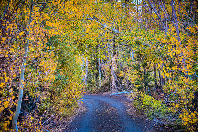 Road In The Fall Poster by Connie Cooper-Edwards