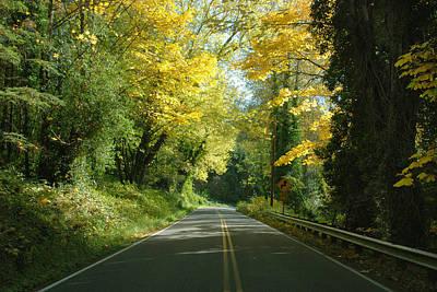 Road Through Autumn Poster