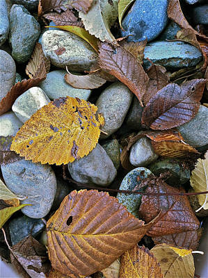 Rocks And Leaves Poster by Bill Owen