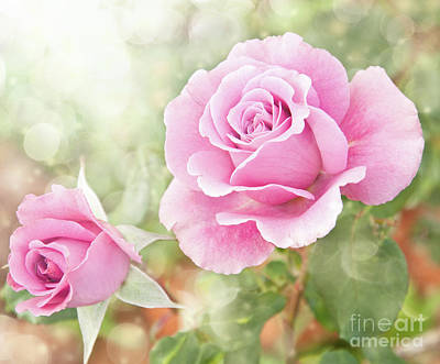 Romantic Roses In Pink Poster