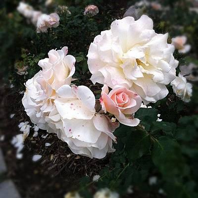 Rose Garden @ Huntington Library Poster