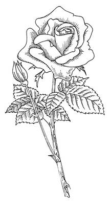 Rose, Lino Print Poster