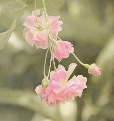 Rose Vine Poster by Kim Hojnacki