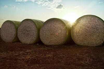 Round Bales Of Picked Cotton Poster