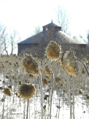 Round Barn With Sunflowers Poster by Peggy  McDonald