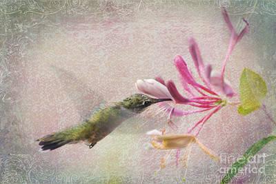 Ruby Throated Hummingbird #3 Poster by Betty LaRue