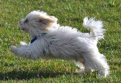 Run Like The Wind Poster