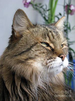 Runcius- My King Kitty Enjoying The Sunshine Poster by Ausra Huntington nee Paulauskaite