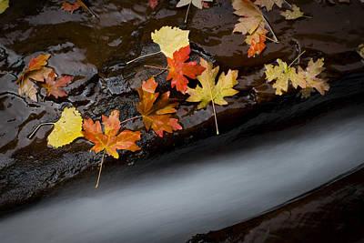 Rushing Autumn Poster
