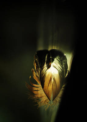 Sacred Heart Poster by Rebecca Sherman