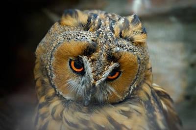 Sad Owl Poster