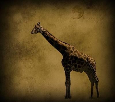 Safari Moon Poster