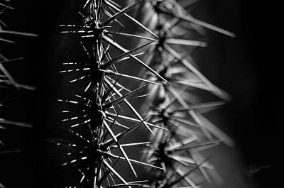 Saguaro Nights Poster by Vicki Pelham
