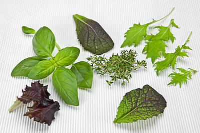 Salad Greens And Spices Poster