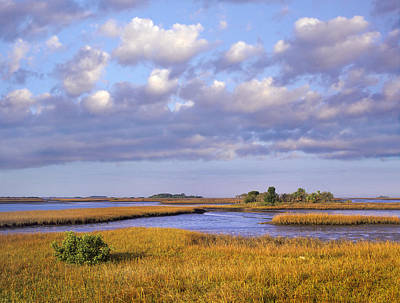 Saltwater Marshes At Cedar Key Florida Poster by Tim Fitzharris