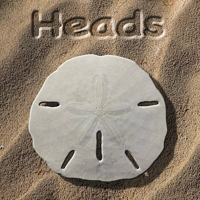 Sand Dollar Heads Poster by Mike McGlothlen