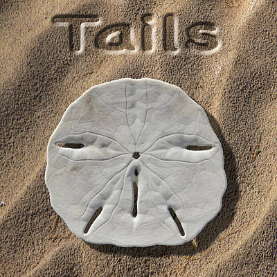 Sand Dollar Tails Poster by Mike McGlothlen