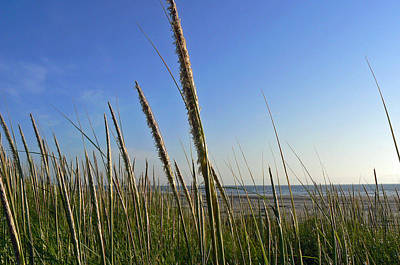 Poster featuring the photograph Sand Dune Grasses by Pamela Patch
