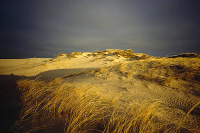 Sand Dunes And Beach Grass In Golden Poster by James P. Blair