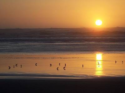 Poster featuring the photograph Sandpipers At Sunset by Peter Mooyman
