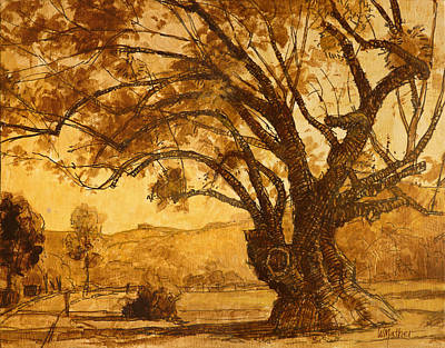 Sanmarin California Tree Poster by Bill Mather