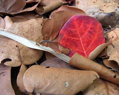 Scarlet Seagrape Leaf Still Life Poster