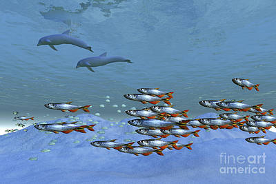 Schools Of Fish Swim In The Blue Ocean Poster by Corey Ford