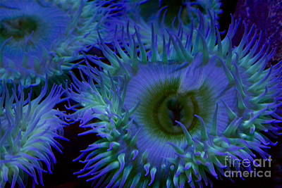 Sea Anemone Poster by Xn Tyler