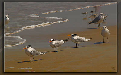 Poster featuring the photograph Sand And Sea Birds by Barbara Middleton
