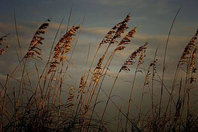 Poster featuring the photograph Sea Oats by Joetta West