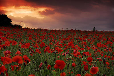 Poster featuring the photograph Sea Of Poppies by John Chivers