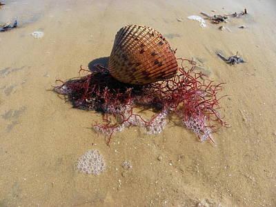 Sea Shell Seaweed An Sand 1 Poster