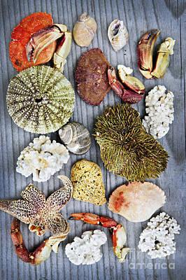Sea Treasures Poster by Elena Elisseeva