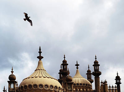 Seagull And Brightonpavillion Poster by Darren Lehane