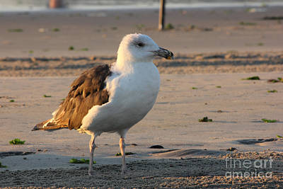 Seagull Beach Ocean Seaview Oceanview Beaches Photos Pictures Buy Sell Selling Gallery Photo New Poster
