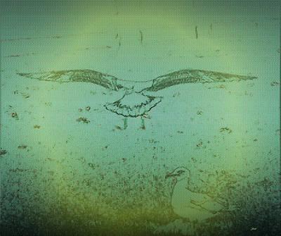 Seagull Landing Poster by Judith Szantyr