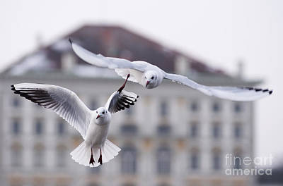 Seagulls At Nymphenburg Palace Poster by Andrew  Michael