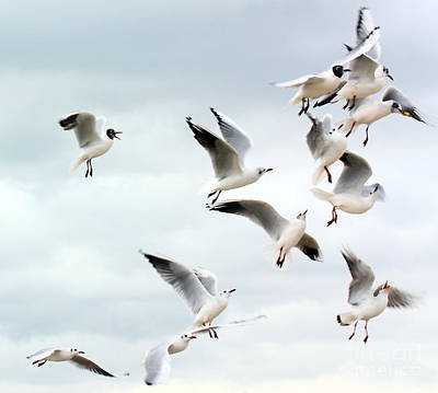 Seagulls Flying For Food Poster by Simon Bratt Photography LRPS