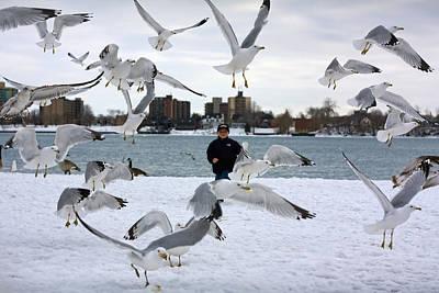 Seagulls In Flight Poster by Gordon Dean II