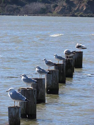 Poster featuring the photograph Seagulls Rest by Bonnie Muir