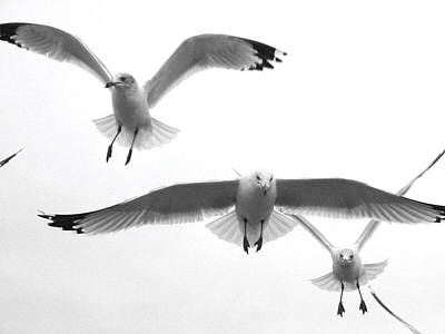 Poster featuring the photograph Seagulls Soaring by Lyn Calahorrano