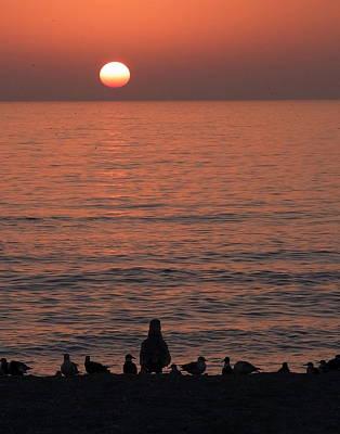 Seagulls Watching Sunset Poster