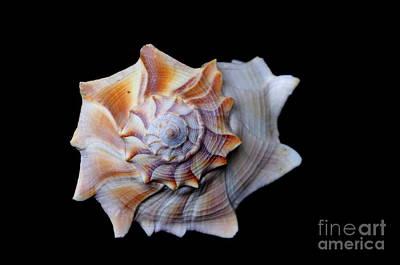 Poster featuring the photograph Seashell 1 by Deniece Platt
