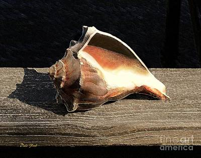 Seashell Poster by Dale   Ford