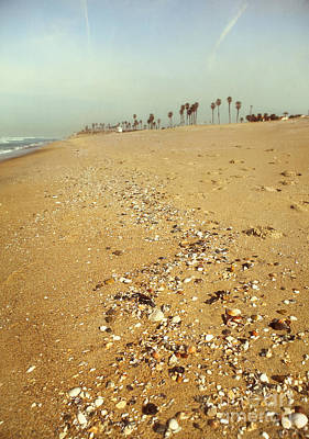 Seashells Washed Ashore Poster by Susan Gary