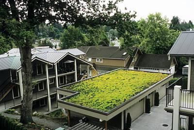 Sedum Roof, Late June Poster by Alan Sirulnikoff